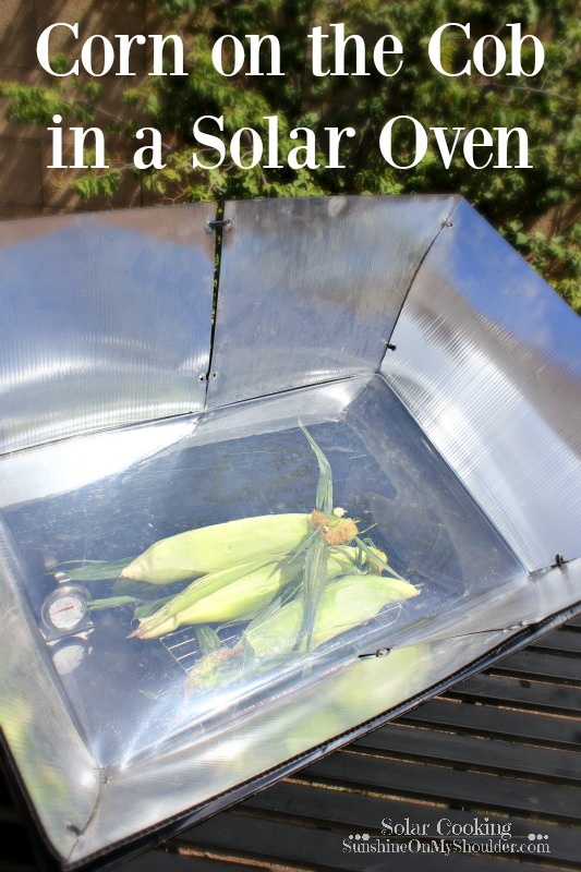 Corn on the cob cooked in a solar oven