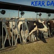 Kerr Dairy Farm