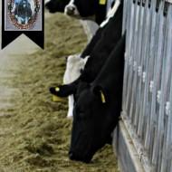 Caballero Dairy Farm