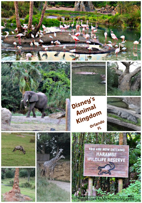 Animal collage of Disney's Animal Kingdom