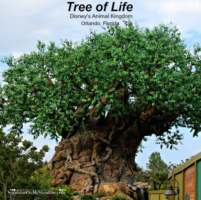 Tree of Life Disney's Animal Kingdom