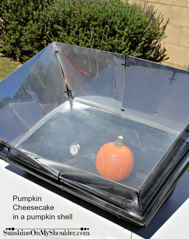 Pumpkin Cheesecake in a pumpkin shell baked in a solar oven.